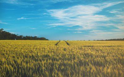 What Is An Environmental Impact Assessment (EIA)?